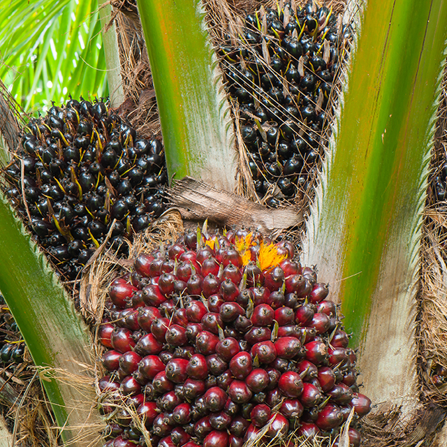 Palm Oil Industries Nsk Global